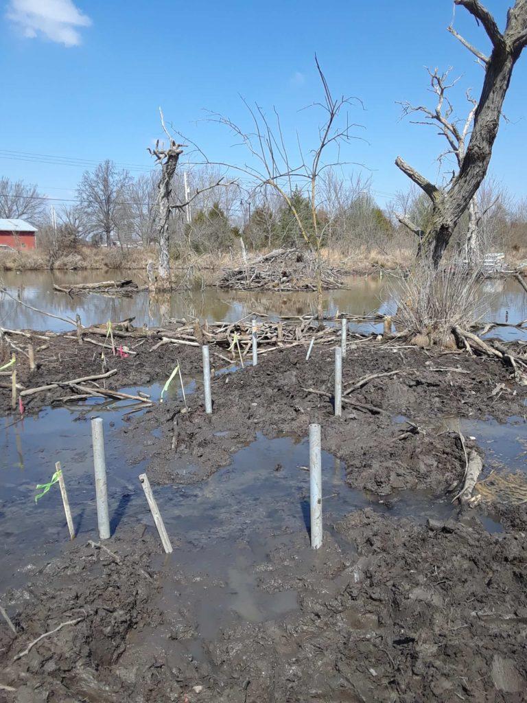 Lake Bentonville swampland